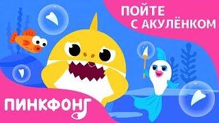 Зубы Акулёнка | Пойте с Акулёнком | Пинкфонг Песни для Детей