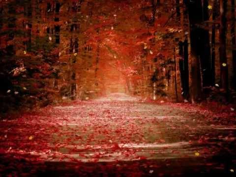 Beautiful Forest Screensaver http://www.screensavergift.com