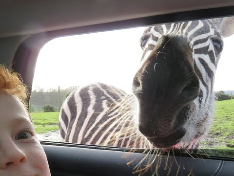 West Midlands Safari Park Trip January 2017!