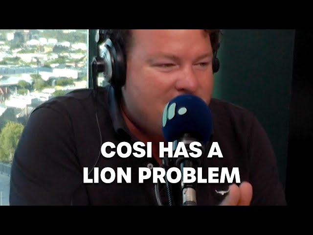 Cosi Has A LION Problem   Bec Cosi and Lehmo