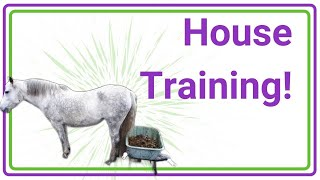House-Train your Horse