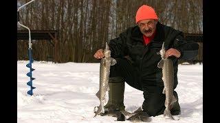 Ловля форели на блесну.Ловля форели зимой на платном пруду. Зимняя ловля форели.