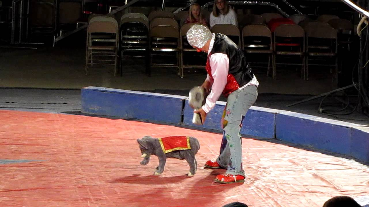Dog used in performance by Circus Gatti. : circus elephant costume  - Germanpascual.Com