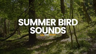 Bird Sounds | Nature Birds Noises | Royalty Free Sound Effect