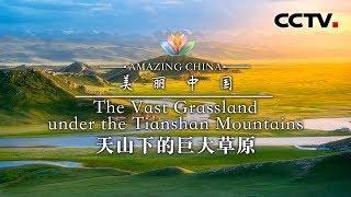 《美丽中国》 天山下的巨大草原 | CCTV