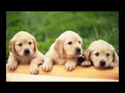 Dog Wallpaper YouTube