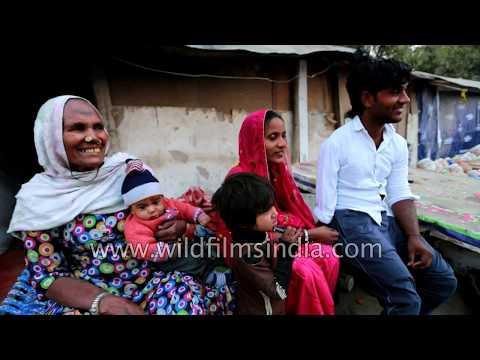 Birju's story: wildf