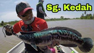 Casting Toman di Sungai Kedah Mantera Pengelak Kumpau