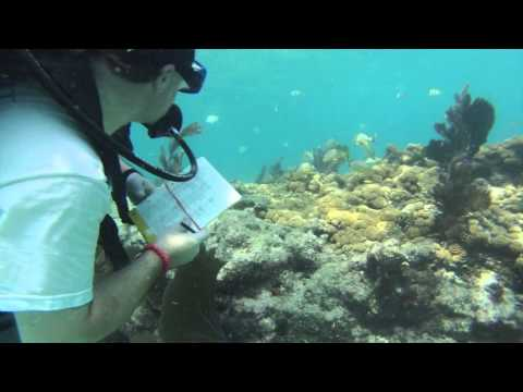 Canterbury School's Venture Crew 210 Blue Ocean Film Festival Submission