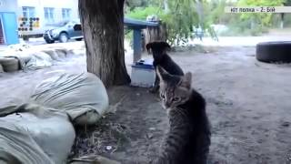 Кот батальона Азов на службе