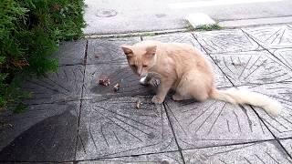 Бездомный, рыжий кот по имени Боб.