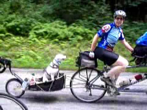 Dog On A Tandem Bicycle Youtube