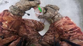 Рыбалка в Астрахани зимняя рыбалка на судака супер клёв