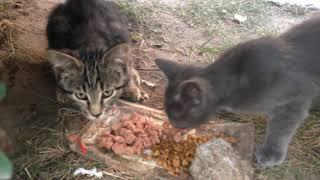 Надо помогать бездомным животным, хоть немного