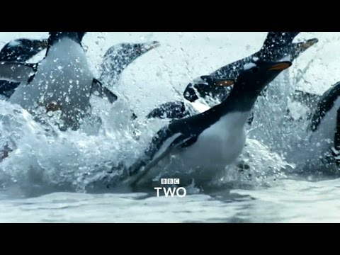 Atlantic: The Wildest Ocean on Earth - Trailer - BBC Two