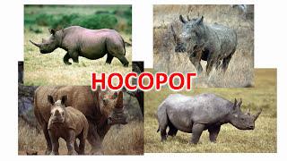 Животные Африки | Развивающий ролик для детей о диких животных | Слайд-шоу (HD)