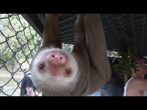 A Day at Costa Rica Animal Rescue Center in 1 Minute