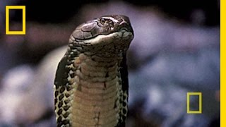 Borneo: Paradise Under Siege   National Geographic