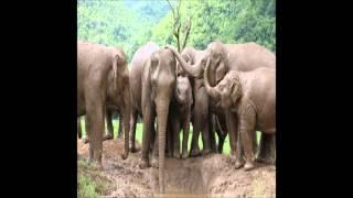 Noel Semaj - The L E Phantz Family Reunion Song (Recorded 7/12/2012 @4:13am)