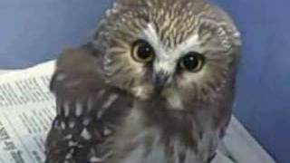 Rescued Owl Sponsored By Sinus Buster