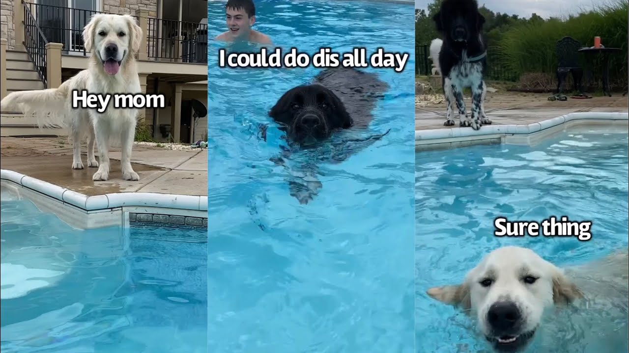 Dogs Have A Pool Day