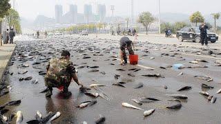 आसमान से हुई मछली की बारिश | 10 Unbelievable Things.