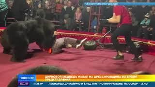 Медведь напал на дрессировщика во время шоу