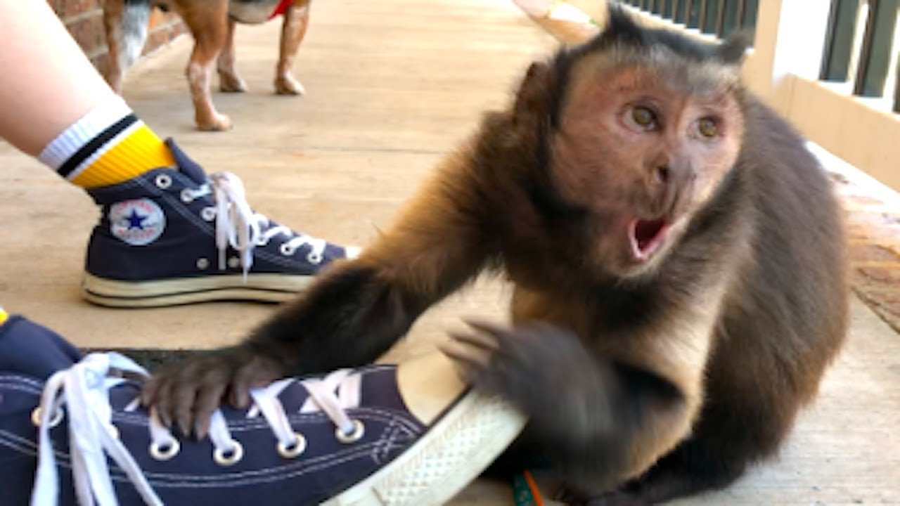 Image result for monkey with shoes
