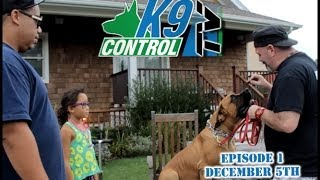 South African Boerboel , Long Island Dog Training, Training Tips, K9 Control Tv