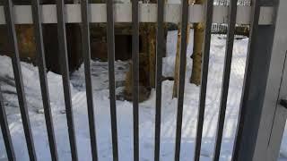 В Екатеринбурге проснулись медведи