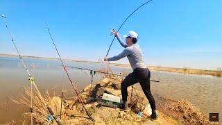 Карповая Рыбалка 2019! Платное озеро п.Тастак! Казахстан!