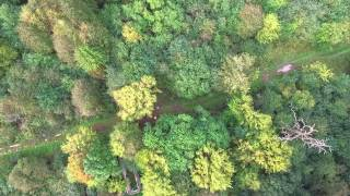 Runine Im Wald innen (Elbauen GK)