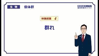 【高校生物】 個体群4 群れ(15分)