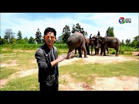 Mystery Project อยากเชื่อ ต้องเห็น | โฮมเสตย์ช้างบ้านหนองบัว จ.สุรินทร์ | 25-08-58 | TV3 Official