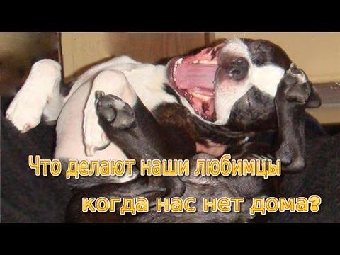 ТОП 10: сконфуженные СМЕШНЫЕ СОБАКИ // СОБАКИ в замешательстве:)) Смешно ДО СЛЁЗ! // Смешные собаки