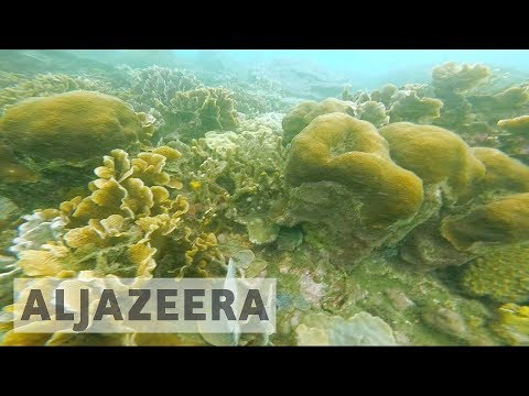 Colombia shipping channel endangers unique reef