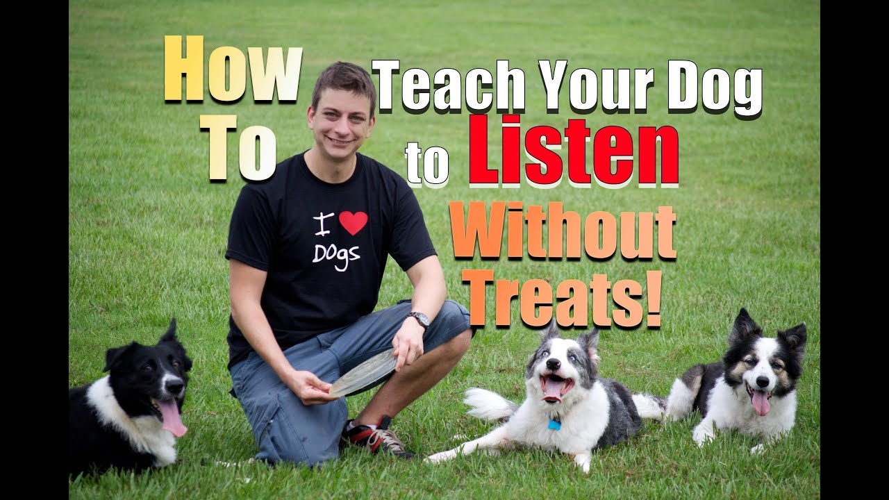 Come Up With Dogs - 11 Ideas to Get You Started