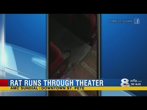 Video Shows Rat Scaring Moviegoers At AMC Theater In St. Pete