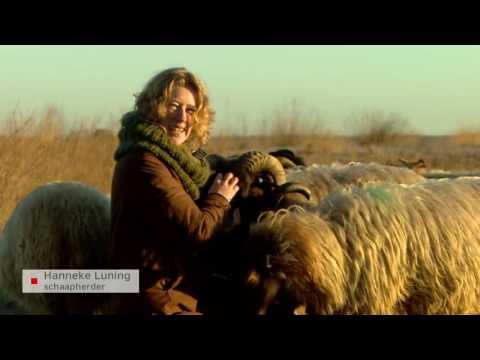 'Ik wilde altijd al schaapherder worden en dat is nu gelukt'