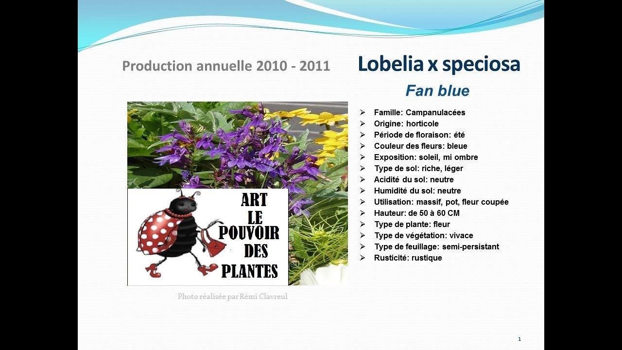 Lobelia X Speciosa Fan Blue Fiche Technique Plante Annuelle Youtube