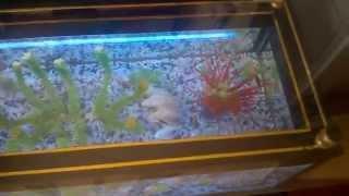 New Concept Aquariums (aquarium Coffee Table) 0725835148