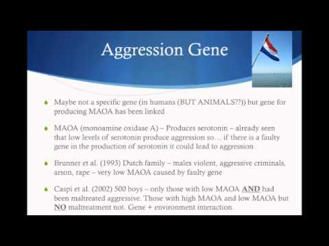 Aggression - Genetic Explanation