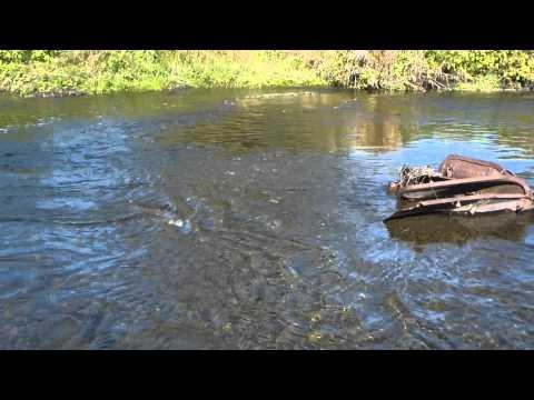 South Sandy Creek Brown Trout