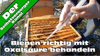 Bienen richtig mit Oxalsaeure gegen Varroamilben behandeln