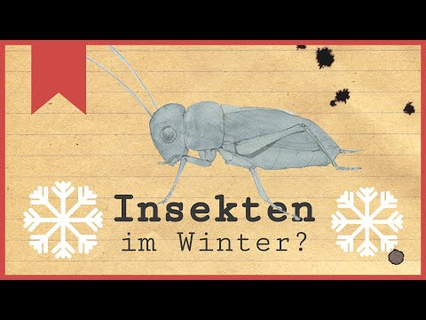 Was machen Insekten im Winter?