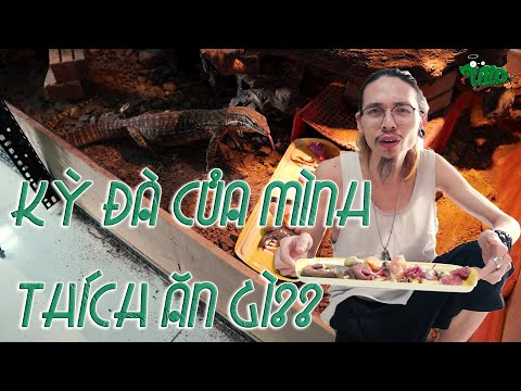Không ngờ kỳ đà của mình lại thích ăn thứ này 😳 - What will my Monitor Lizard Eat First? | WILDVN TV