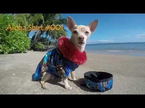 Introducing Maui Bowee