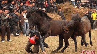 WILD HORSES BEING ABUSED  (Caballos Salvajes) Cruel Macho Men Attack Horses