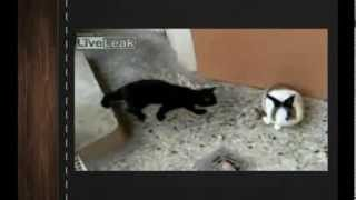 Самые смешные видео приколы про кошек и животных 18 кошка и кролик 2013