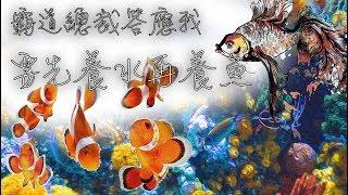 『水族系列 ep07』水族教學 | 褐藻退不了?清魚缸很累? 今天來新手海水養水101 硝化系統建立!『CC字幕』